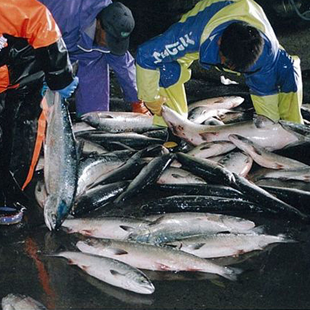 鮭匠ふじい 大吟醸酒粕仕込 魚卵粕漬 サブ画像1
